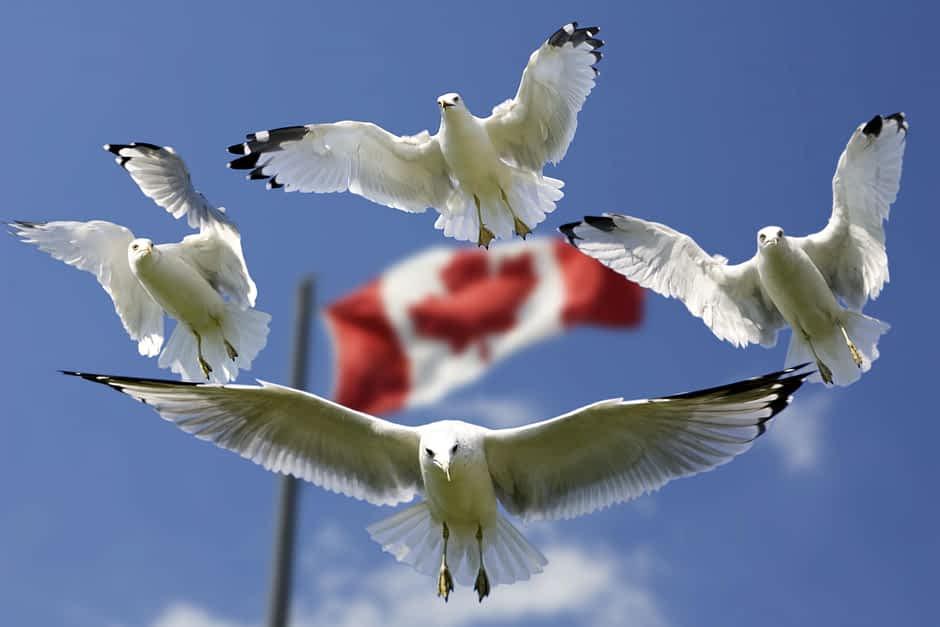 Best Canada Migration COnsultant in Melbourne